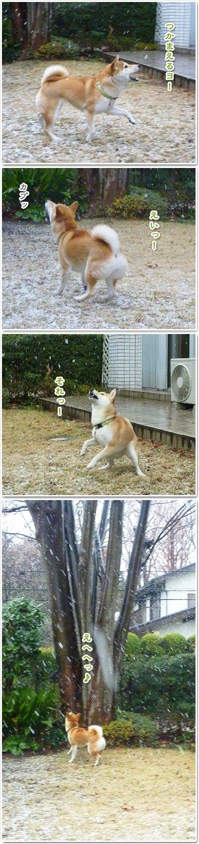 あたち柴犬 抹茶だヨ!  - 伊賀忍者柴犬の道 --120127_p5お菓子の妖精