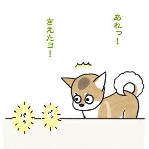 あたち柴犬 抹茶だヨ!  - 伊賀忍者柴犬の道 --120127_2お菓子の妖精