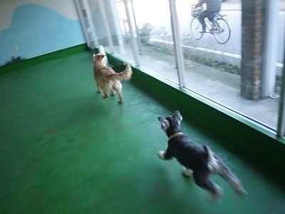 家庭犬しつけ訓練 A feel