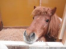 馬を愛する男のブログ Ebosikogen Horse Park-ポニー