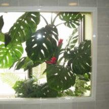 人工観葉植物でガーデ…