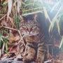 猫写真展&猫アクセサ…