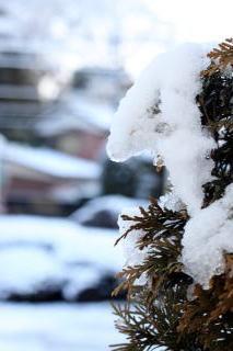 雪☆の記事より