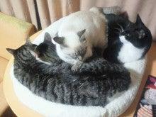 主婦nekoyamaのゆるゆる日記-2012010522410000.jpg
