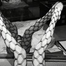 蛇、ゆきます