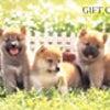 ≪2点以上の注文≫で500円分クオカード追加プレゼント!!の画像