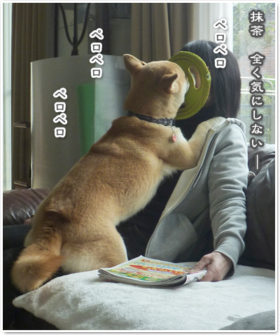 あたち柴犬 抹茶だヨ!  - 伊賀忍者柴犬の道 --120127_p02尿結石再検査と天然オヤツ