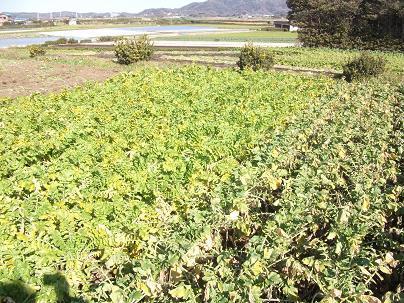 農業のトータルコーディネータ  イノウエ農商事のブログ-01272
