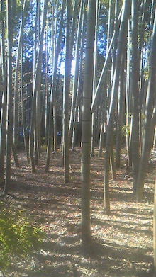 みわくのみわくん 園山農園ブログ-201201261337000.jpg