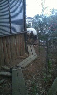 馬を愛する男のブログ Ebosikogen Horse Park-チェリーの脱走