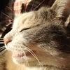【ちびネタ】 ちびの気ままな猫生活 22の画像
