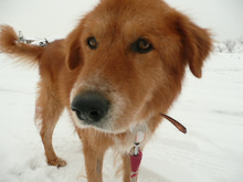 T&T活動記録 ~福島被災犬の幸せを願って~-ごんた