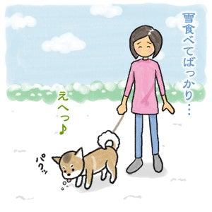 あたち柴犬 抹茶だヨ!  - 伊賀忍者柴犬の道 --120201_1雪食い合戦