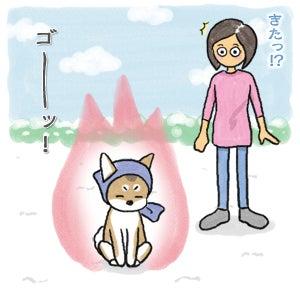 あたち柴犬 抹茶だヨ!  - 伊賀忍者柴犬の道 --120201_6雪食い合戦