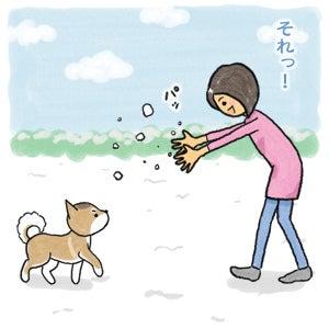 あたち柴犬 抹茶だヨ!  - 伊賀忍者柴犬の道 --120201_4雪食い合戦