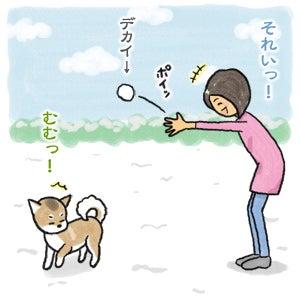あたち柴犬 抹茶だヨ!  - 伊賀忍者柴犬の道 --120201_7雪食い合戦
