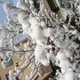 雪が積もった植物たち