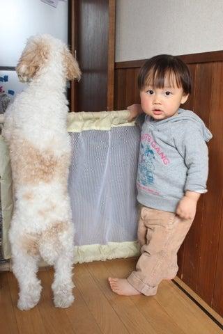 モコログ  ~コッカプー「モコ」とムスコちゃん~