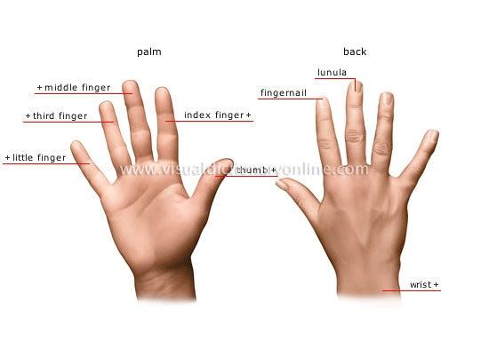 親指、人差し指、中指… | 多読 d...