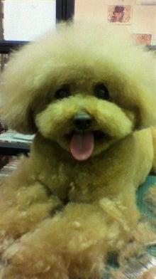 リク&トト ただいま看板犬見習い中-2012020720500001.jpg