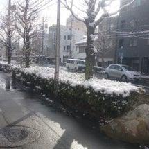 雪降ってます