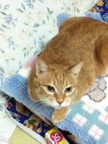 Usamixのブログ-猫