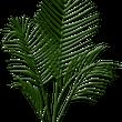 観葉植物のヤシを作っ…