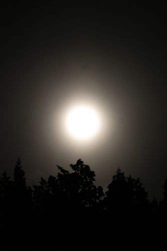 占いは幸せになるためのツール みさきのゑHAPPYになるブログ-満月