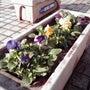 塩浜商工振興会の「花…