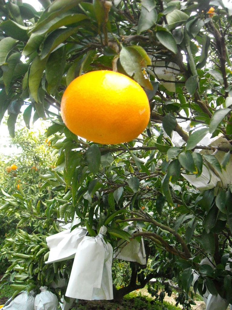 美と健康の米ぬか 諫早ふみちゃん農園ふみちゃんブログ