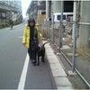 高崎市・藤岡市 犬のしつけ 街中訓練の画像