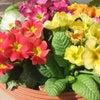 みんなで綺麗な花を咲かせましょう!(^^)!の画像