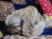 盲導犬アトムの 奇怪な行動分析 シャムネコのブログ