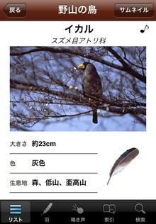 鳴き声と羽でわかる野鳥図鑑