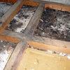 天井裏に施されたネズミ防除の内容を考えるの画像
