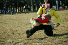 ミニシェルティ・シオンのブログ-2012021920020002.jpg