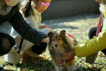 ミニシェルティ・シオンのブログ-2012021920020001.jpg