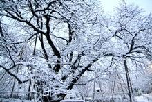 「ぎゃらりーたちばな」更新日記-枝ぶりと雪