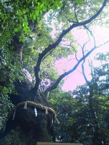 mana-〇-お清水さん手前の楠木