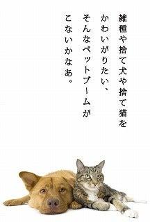 浦安の猫専門ペットシッター【キャットシッターME】舞浜・新浦安・京葉線 市川市・船橋市・習志野市・千葉市美浜区 ねこの留守番サービス-こないかな