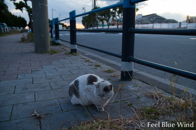 京浜島の猫