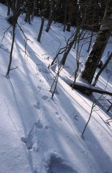 .-0221三峰山(獣の足跡1