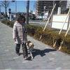 前橋市 犬のしつけ 外回り訓練(単独)の画像
