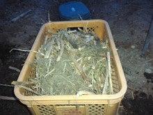 はるうた農園作業日誌-残渣抜き3