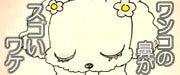 雑種犬ハナジロウ日記