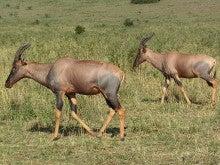 PS.『ラブレターフロムナイロビ!!』  野生の王国・アフリカ・ケニアから『WONDERFUL WORLD』をお届けします。