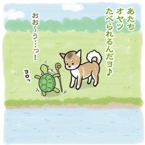 あたち柴犬 抹茶だヨ!  - 伊賀忍者柴犬の道 --120226_8柴犬抹茶、ストルバイトが消える!
