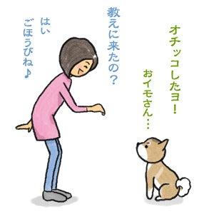 あたち柴犬 抹茶だヨ!  - 伊賀忍者柴犬の道 --120226_5柴犬抹茶、ストルバイトが消える!