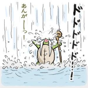 あたち柴犬 抹茶だヨ!  - 伊賀忍者柴犬の道 --120226_6柴犬抹茶、ストルバイトが消える!