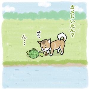 あたち柴犬 抹茶だヨ!  - 伊賀忍者柴犬の道 --120226_7柴犬抹茶、ストルバイトが消える!